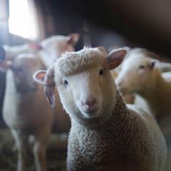 Australians come together to improve animal welfare