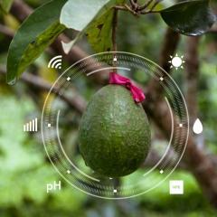 Researchers dish up digital avocado
