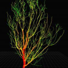 Multi-million dollar collaborative project to design the tree of the future