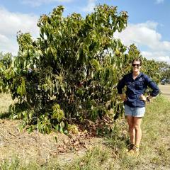 Avocado research trial targets high yields