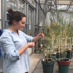 Tamaya Peressini's journey to the International Maize and Wheat Improvement Centre (CIMMYT)