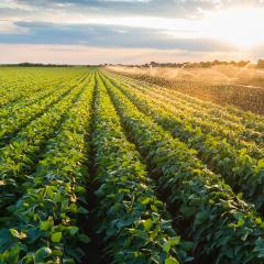 Nutritional strategies to support productive farming systems