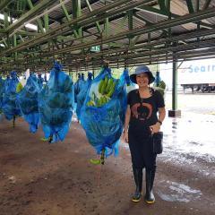 Banana disease research in Costa Rica strengthens Australia's biosecurity