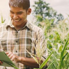 Digital technologies take farmers to market