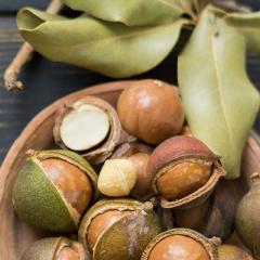 Macadamias under the microscope