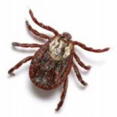 Developing new tick management tools