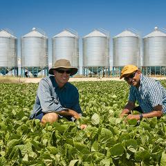 researcher and farmer in a mungbean field